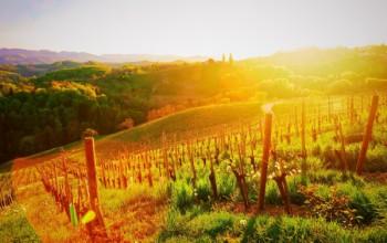 Creative workshop: Ambassador of Protner wines and mini sommelier