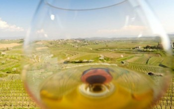 Maribor: Paradise for wine lovers, 1 day
